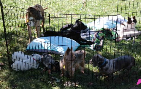 Puppies take over campus to fetch smiles, cuddles from students