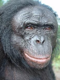 Great Ape Partnership puts Simpson College and Iowa on the map
