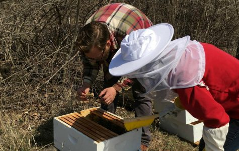 New Beekeeping Club is causing a buzz