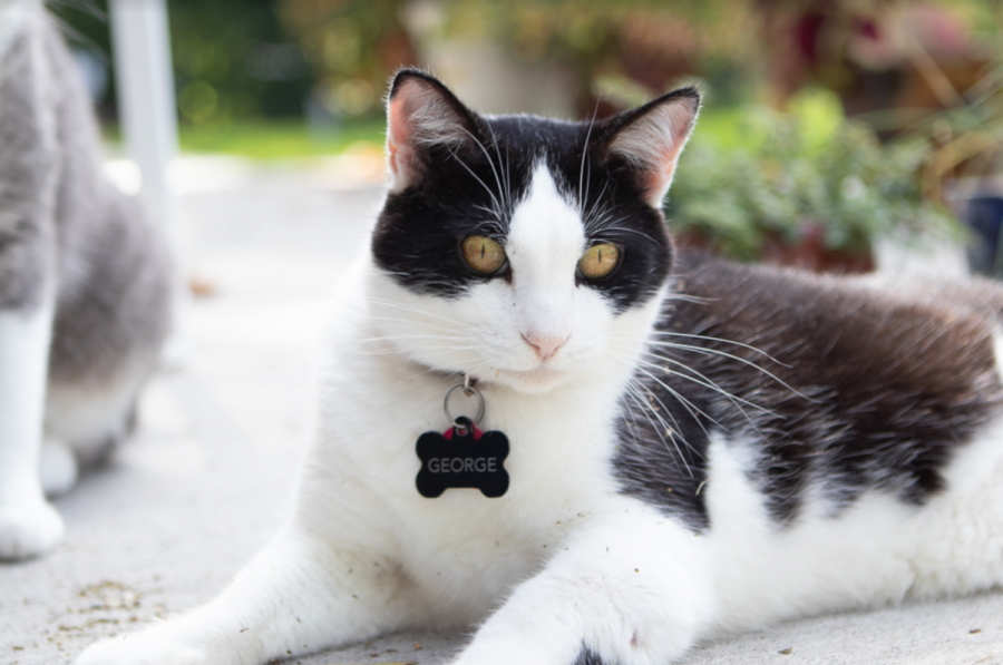 The story of George - the campus cat