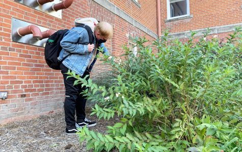 Jordan Courtney hunts for a medallion on campus.